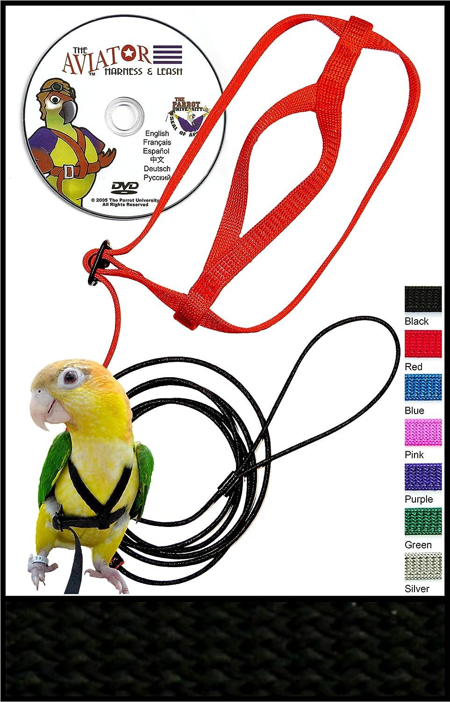 Harness For Parrot Wire Data Schema 172672d1108365013msdignition22rwiringdiagramhowmsdignjpg Amazon Com The Aviator Pet Bird And Leash X Small Black Rh
