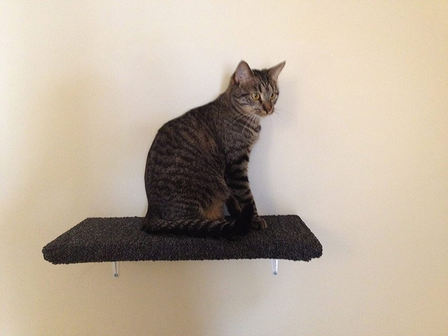 Carpeted Wall Mounted Cat Shelf