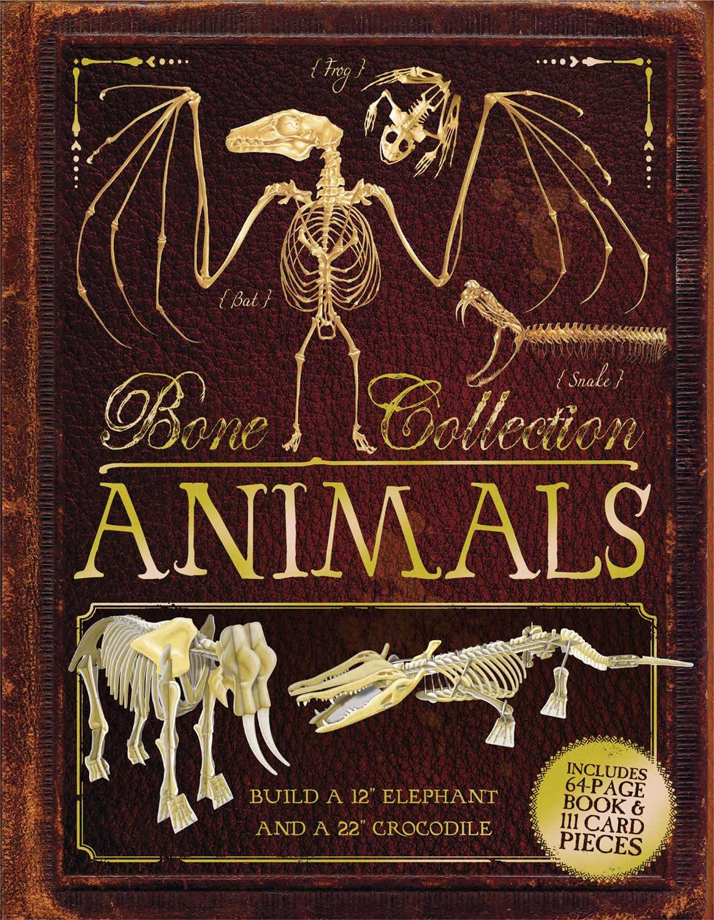 Bone Collection Animals Rob Colson Sandra Doyle Elizabeth Gray Squirrel Skeleton Diagram The Of A Greyhound Steve Kirk 9781684122493 Books