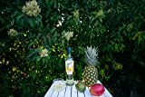 California Fruit Wine Co, Sangria Pineapple