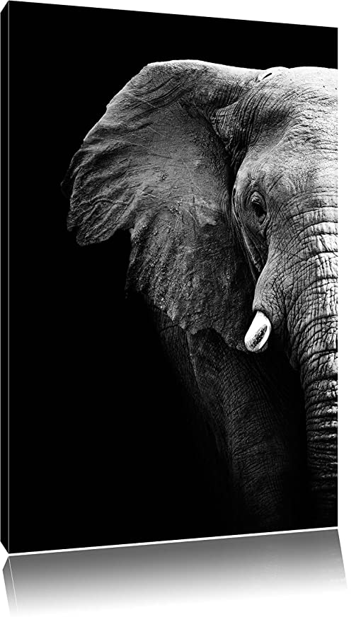 Elefant im Porträt  Leinwandbild Wanddeko Kunstdruck