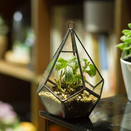 Modern Artistic Tears Shape Diamond 3MM Thick Clear Glass Geometric Polyhedron Terrarium Hanging Air Planter