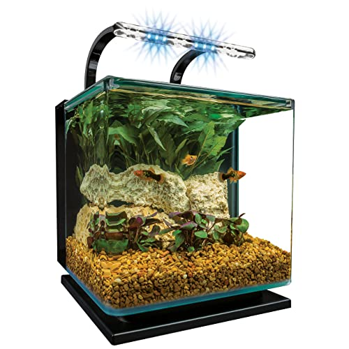 Best small betta fish tank 2 5 3 gallon aquarium kit for Square fish tank