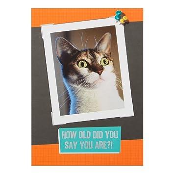 Hallmark Funny Birthday Card Cat Small Amazon Office Products
