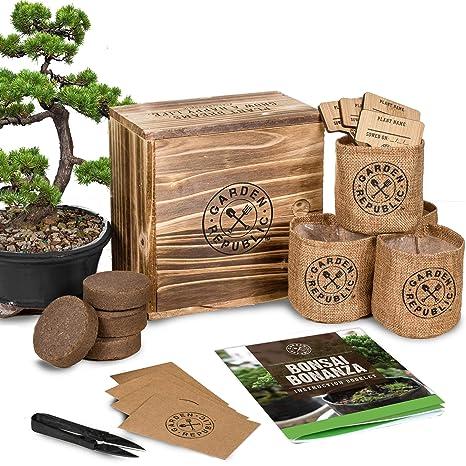 Bonsai Tree Seed Starter Kit - Mini Bonsai Plant Growing Kit, 4 Types of Seeds, Potting Soil, Pots, Pruning Shears Scissor Tool, Plant Markers, Wood Gift ...