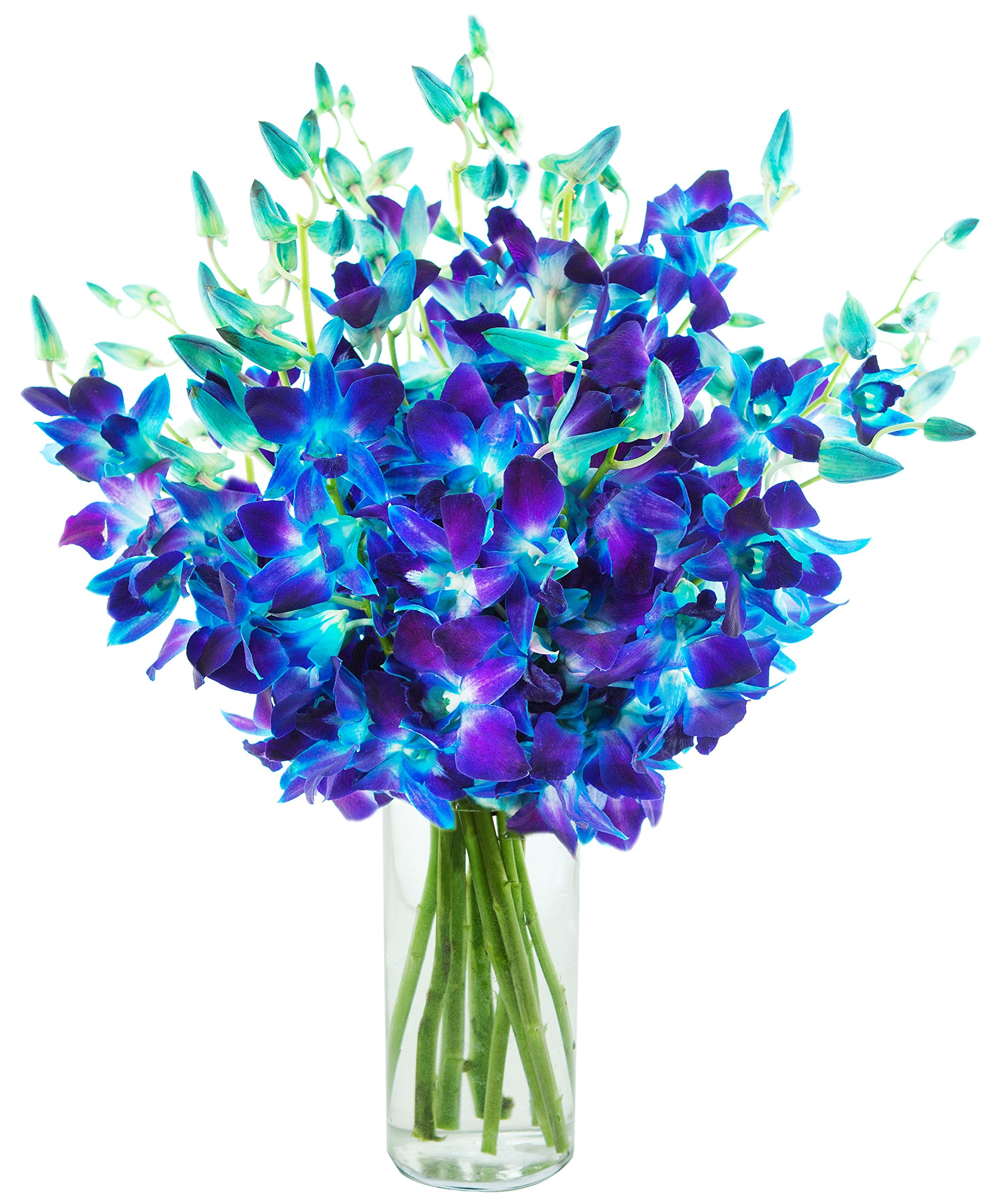 Exotic Sapphire Orchid Bouquet Of 20 Fresh Blue Dendrobium Orchids From Thailand with Free Vase Included