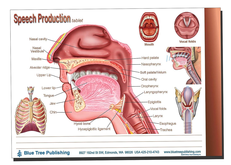 Amazon.com: Voice, Swallowing, Speech Production Tablets, Set-50 ...