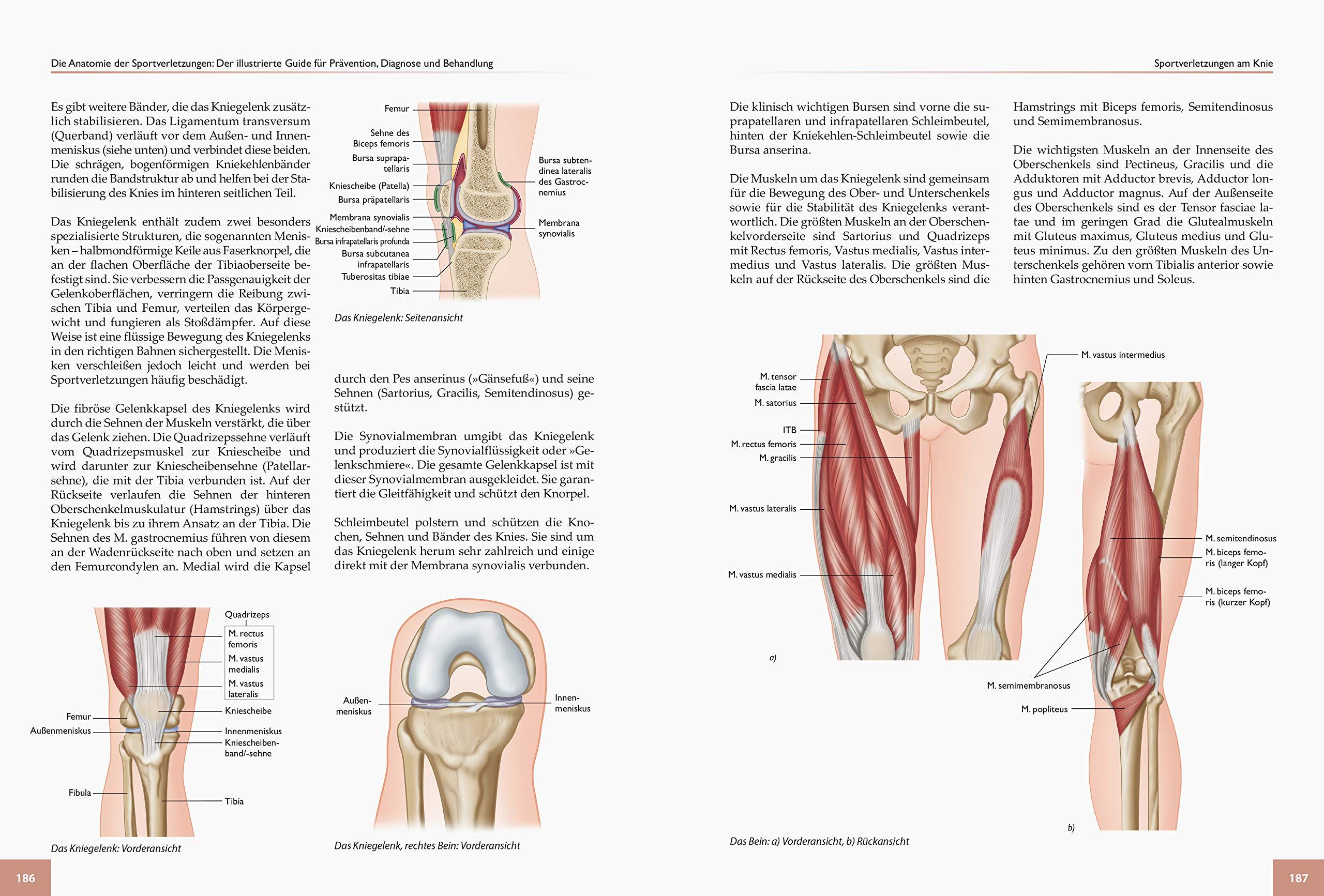 Akuter schmerzen von der innenseite des knies. Knieschmerzen • Das hilft gegen die Beschwerden