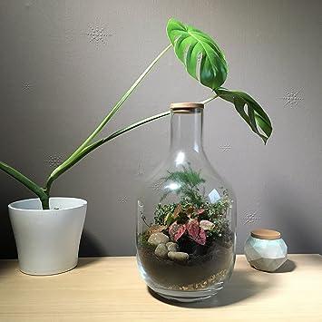 35 5cm Height Diy Handmade Clear Glass Terrarium Kit Open Or Closed