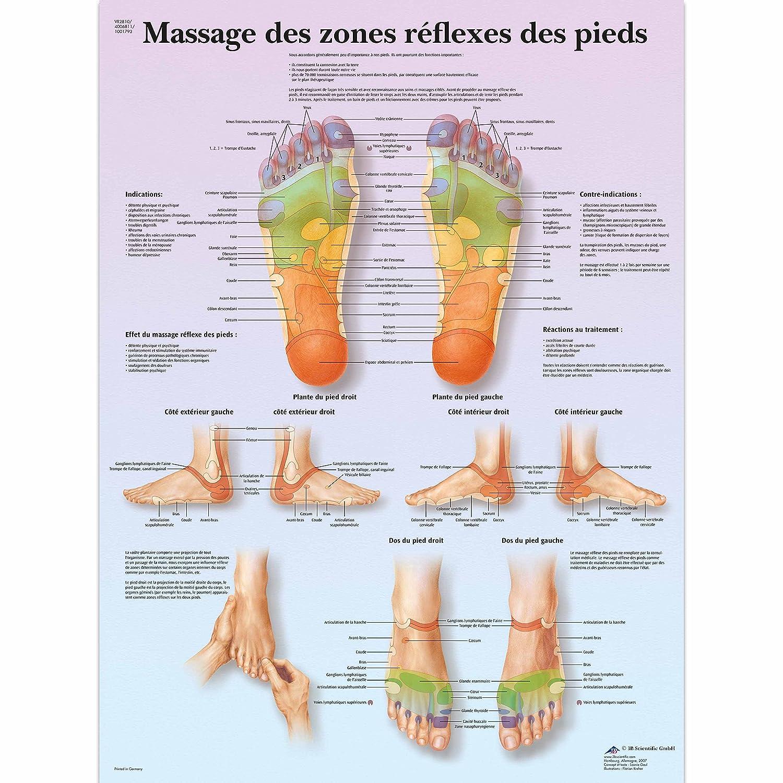 c8eb56e6ef7c4 Amazon.com  3B Scientific VR1810L Glossy UV Resistant Laminated Paper Foot  Reflex Zone Massage Anatomical Chart