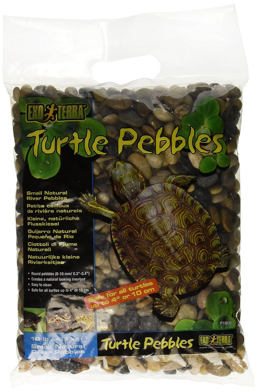Exo Terra Guijarros Turtle Pebbles de 10-20 mm - 4,54 kg: Exo Terra: Amazon.es: Productos para mascotas