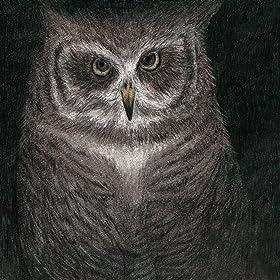 フクロウの声が聞こえる の画像