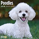 Poodles 2018 16 Month Wall Calendar 12 x 12 inches Bright Day Calendars Publishing