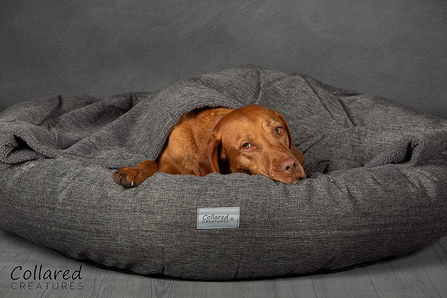 Collared Creatures Comfort Cocoon - Cama para perro 900 mm, color gris: Amazon.es: Productos para mascotas