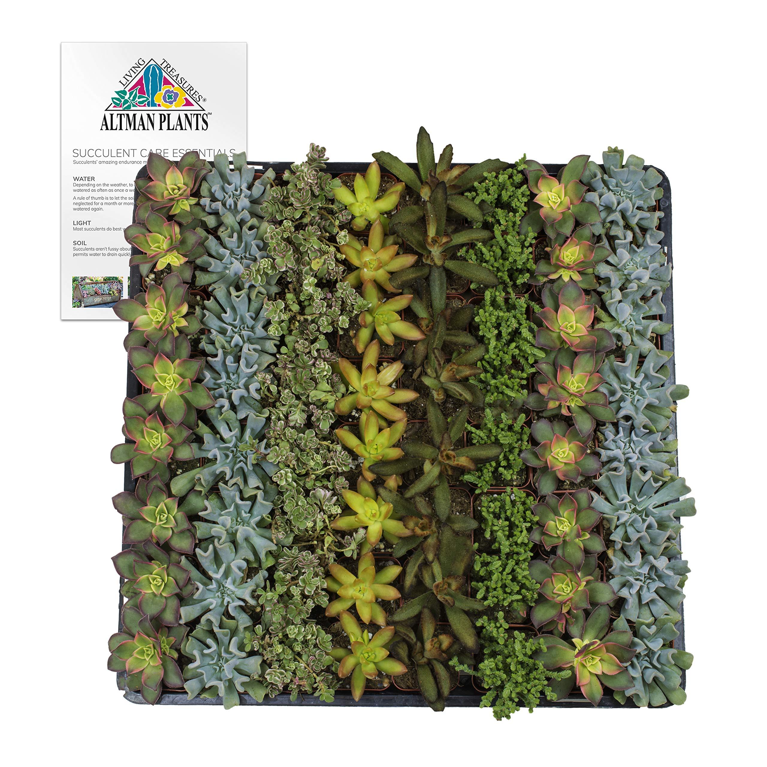 Altman Plants Assorted Succulents Wedding Party Favors Dish Gardens Starter Kit 2'' 64 Pack