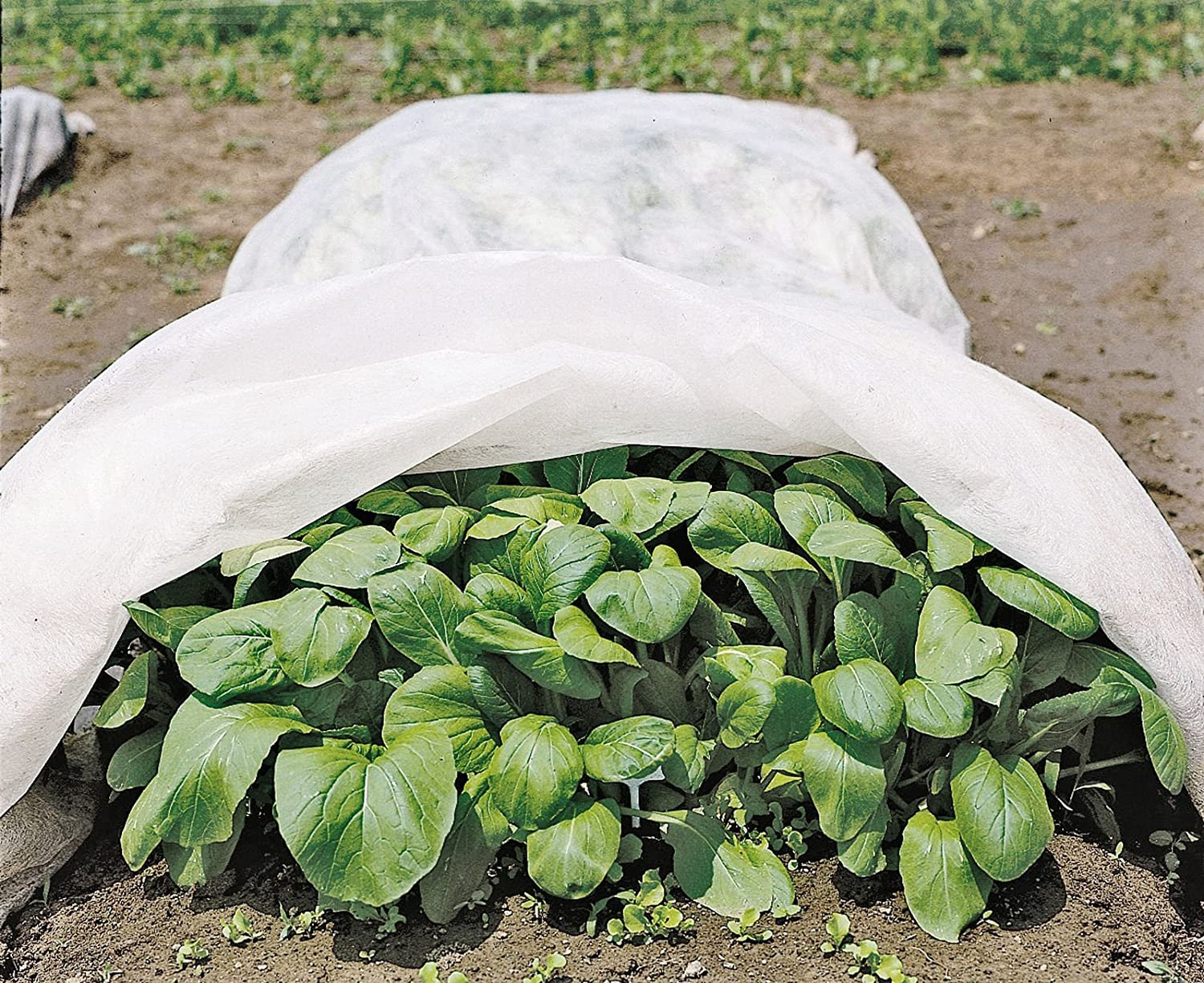 Amazon.com : All Purpose Garden Fabric 12u0027 X 20u0027 : Plant Covers : Garden U0026  Outdoor