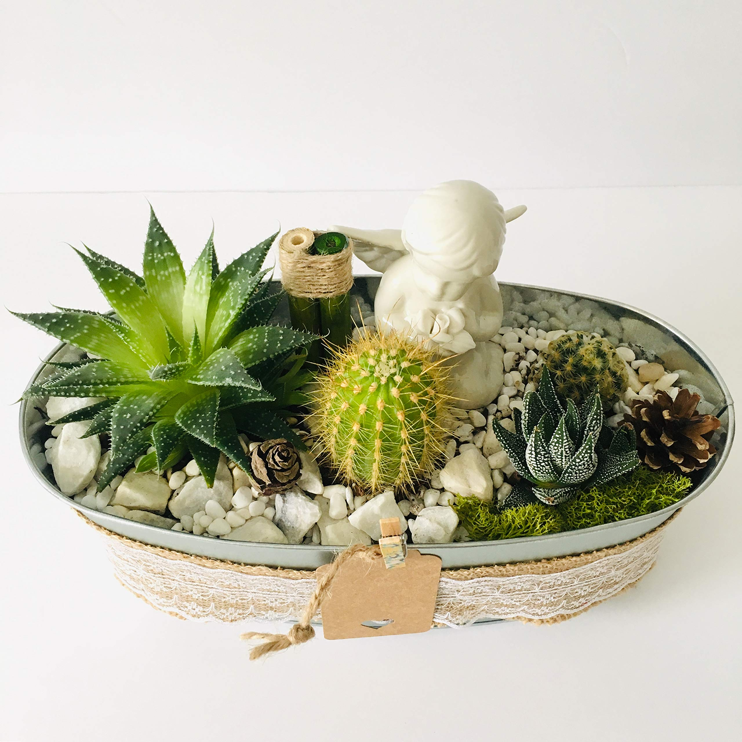 Live Succulent Angel's Garden Arrangement: 1 x 4'' Succulent, 3 x 2'' Succulents/Cacti, Free Gift!!! by Succulent Design Studio (Image #4)