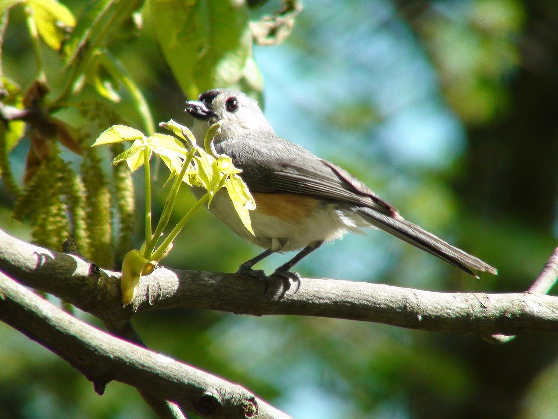 amazon com your backyard identifying 18 common feeder birds by
