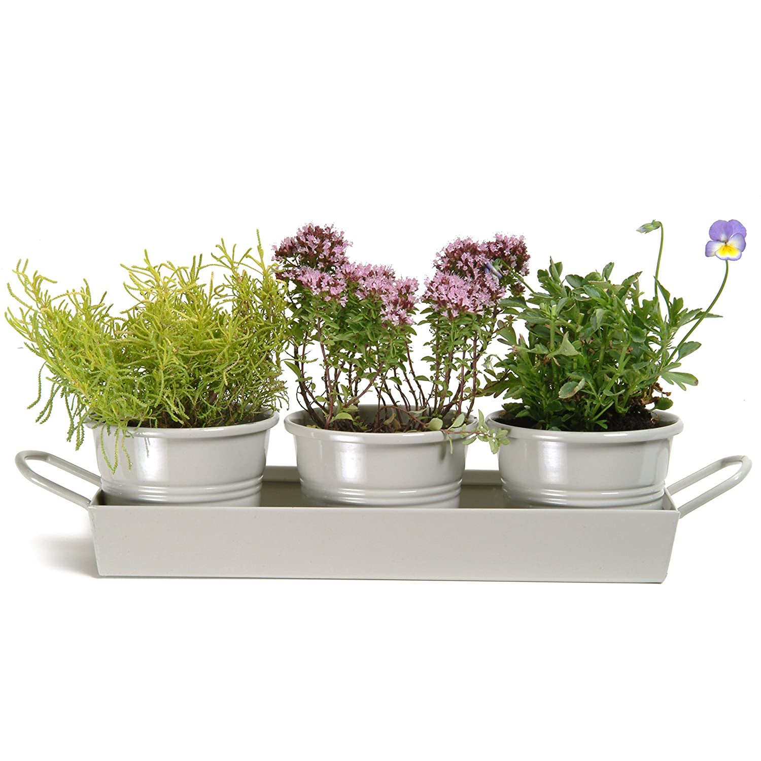 Kitchen Herbs: Kitchen Herb Pots Wooden Planter Window Sill Garden Plant