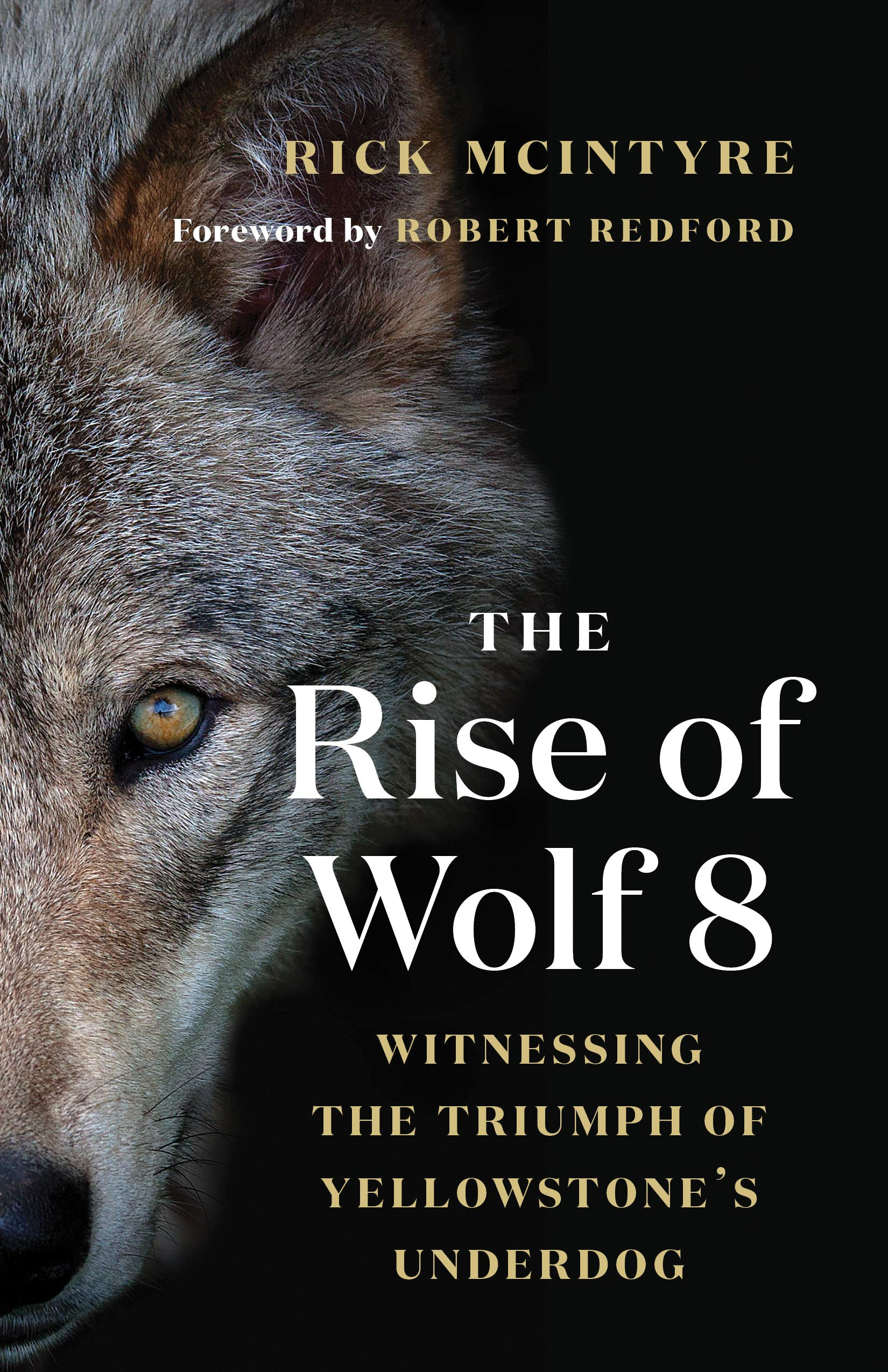 800a715be8e2 The Rise of Wolf 8  Witnessing the Triumph of Yellowstone s Underdog  Hardcover – October 15
