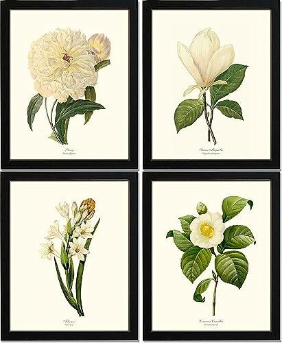 .com: white botanical flower prints, unframed set of 4 vintage ...