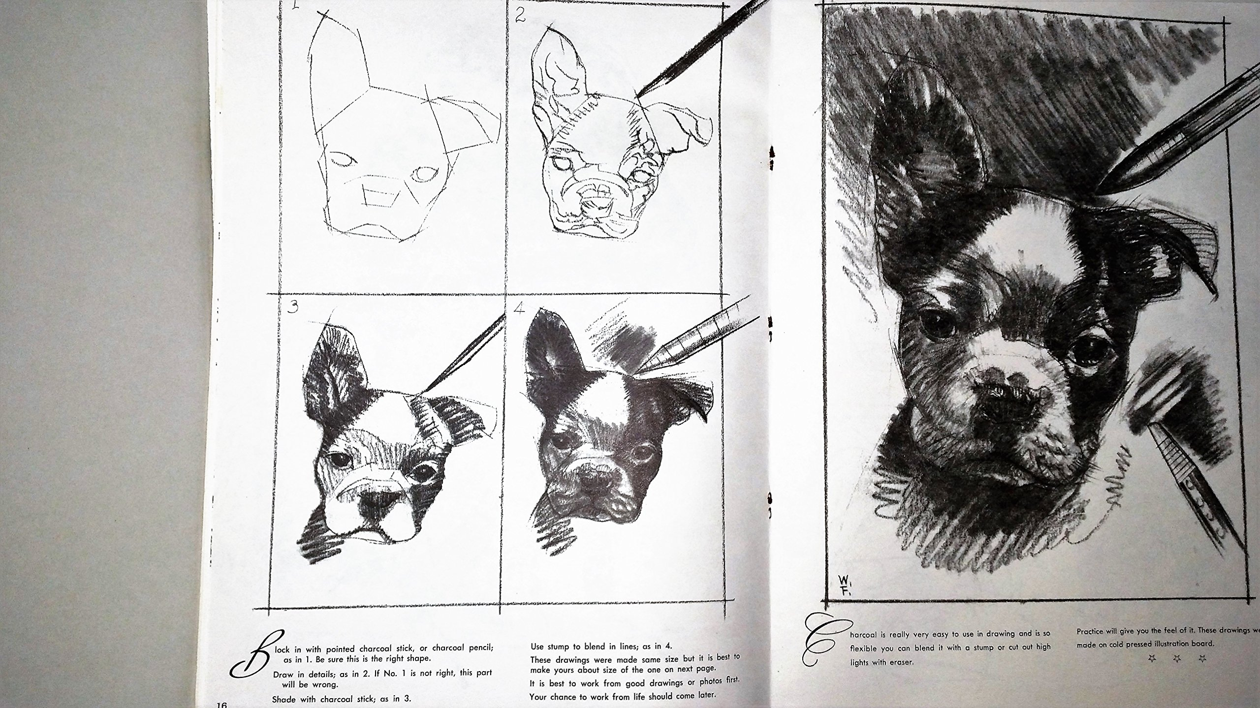 Drawing With No Lines : How to draw & paint dogs: walter foster: amazon.com: books