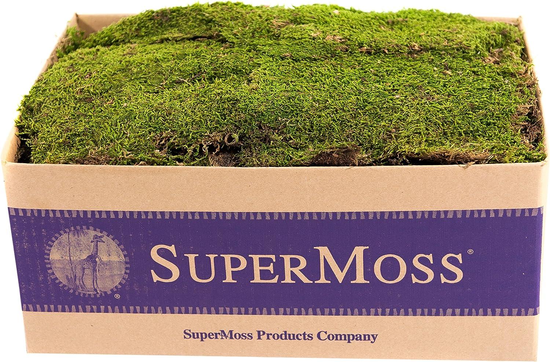 New!Live Sheet Moss Bulk Size