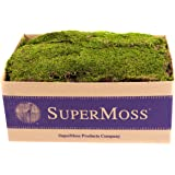 Super Moss 21508 Preserved Sheet Moss, Fresh Green, 5 Pounds