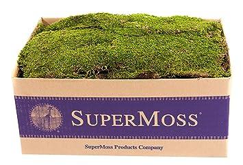 Supermoss 21508 Sheet Moss Preserved Fresh Green 3 5lbs 20 24