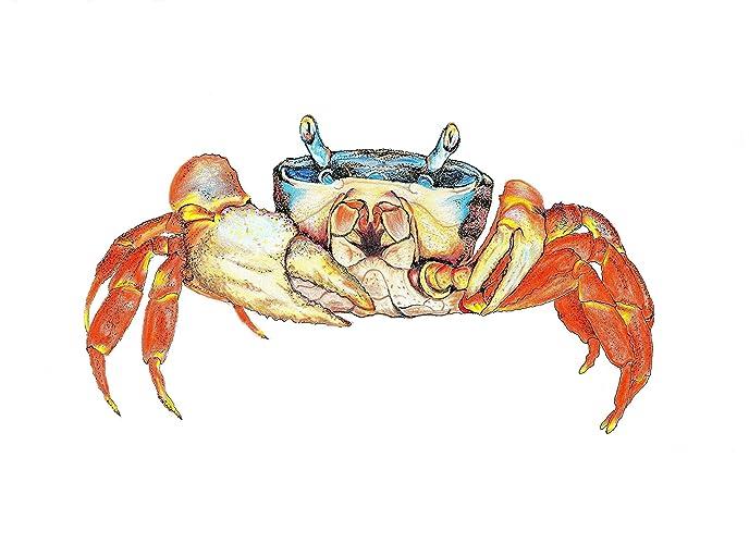 amazon com rainbow crab original decorative art print with matting