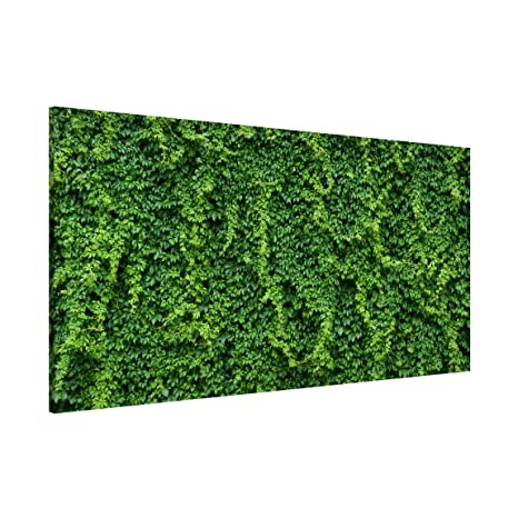 Bilderwelten Pizarra magnética - Ivy - Panorama Formato ...