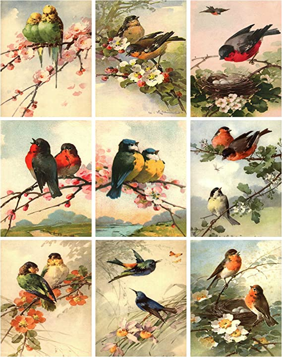 1//2 Sheet Assorted Birds and Trees Black and White Nunn Design Collage Sheet