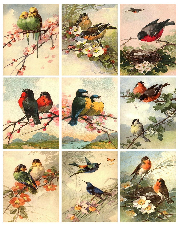 Catherine Klein Vintage Victorian Birds Collage Sheet 8.5 x 11 Bird Art for Scrapbooking, Card Making Paper Moon Media