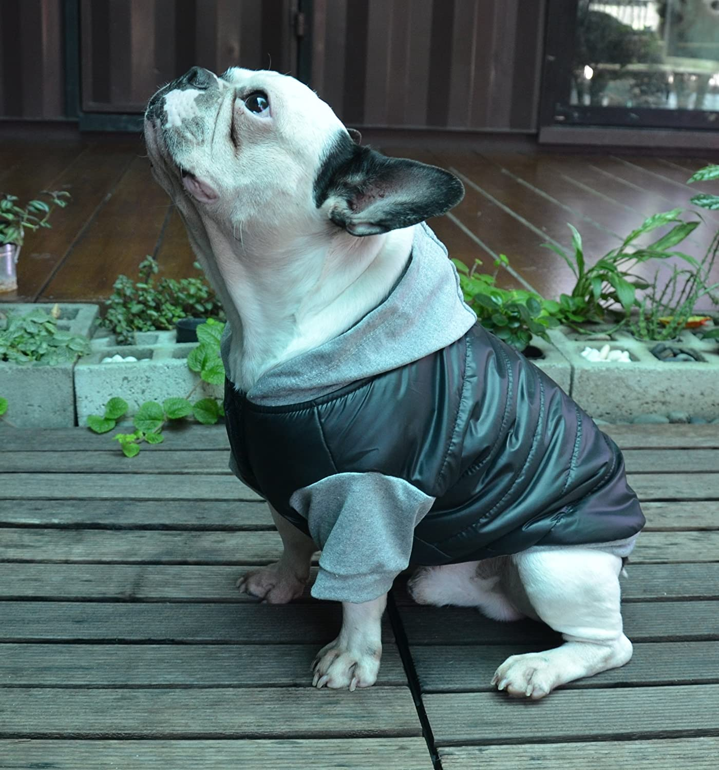 Doggydolly Winter Dog Cane Cappotto Giacca con Cappuccio per Carlino Bulldog Francese Nero Grigio Medium B0757DP7N2