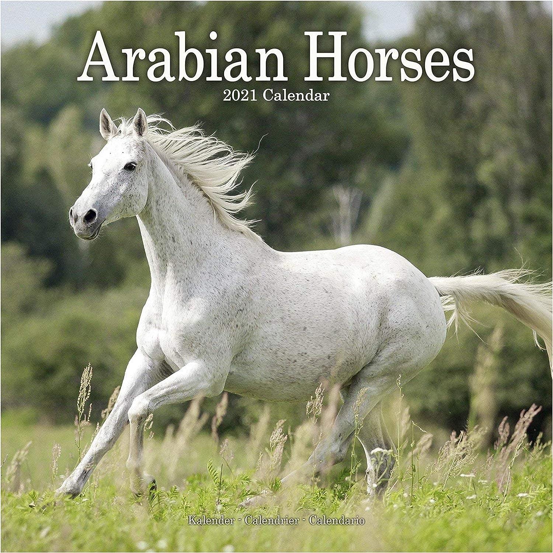 con adesivi organizzativi Calendario 2021 dei cavalli arabi 16 mesi Calendario da parete quadrato