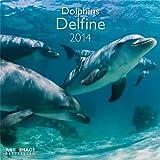 Delfine 2014 Broschürenkalender