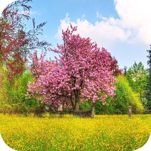 Spring 4k Wallpaper Amazones Appstore Para Android