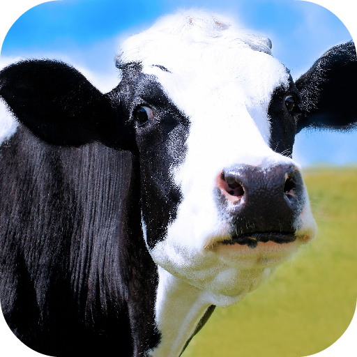 Cow Wallpapers for sale  Delivered anywhere in USA