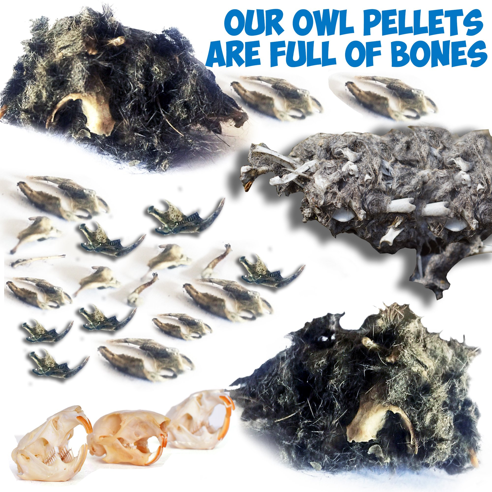 Amazing Owl Pellet Dissection Kit – 6-Piece Owl Pellet Set for Science Lab Projects – w/Tweezers, Magnifying Glass and Wooden Probes – Ideal for Kids, Class Projects – Bonus Barn Owl eBook by Evviva Sciences (Image #1)