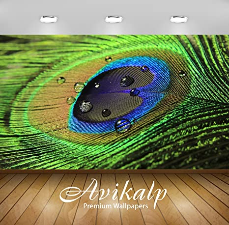 Avikalp Exclusive Awi1493 Beautiful Peacock Feather Full Hd Wallpapers For Living Roomoffice 5 X 4 Ft