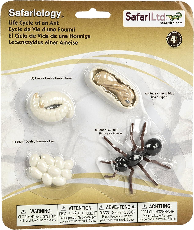 Safari Ciclo de la Vida de una Hormiga.