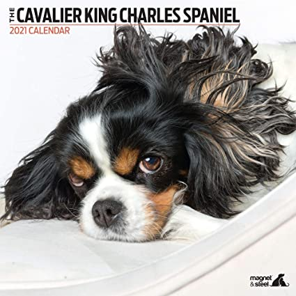 Mag& Steel Calendrier moderne 2021 Cavalier King Charles