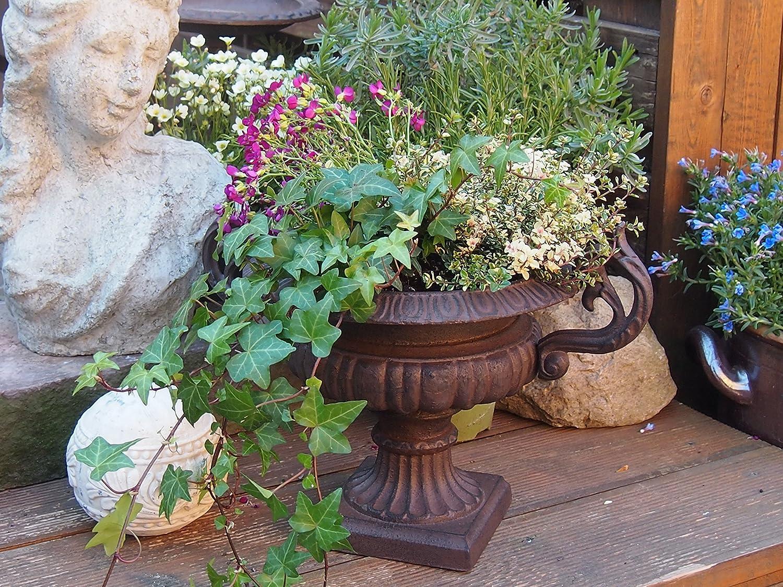 Ánfora, macetas, macetero Jarrón, ánfora Flores, Jardín, Francés, olla, marrón: Amazon.es: Jardín