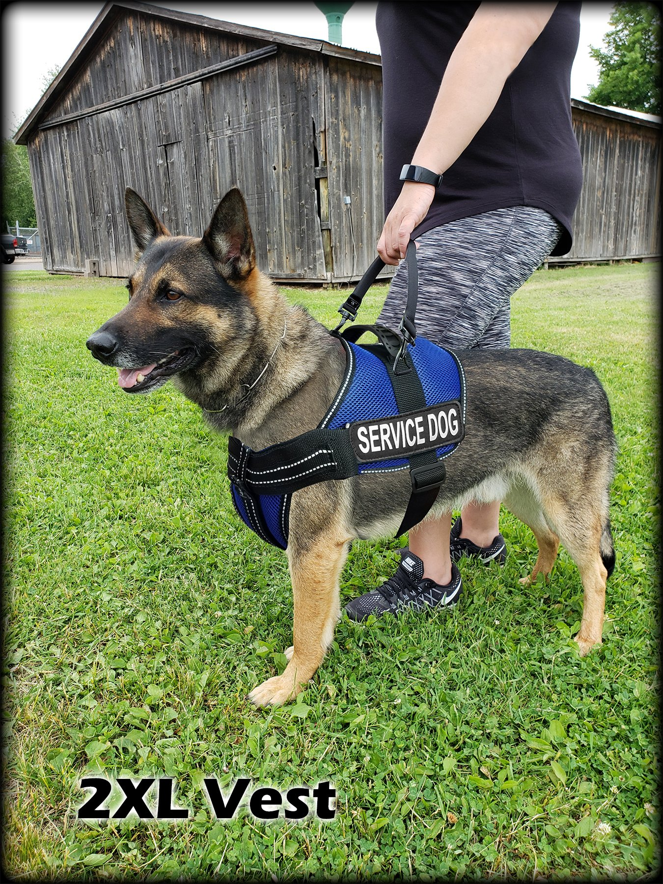Activedogs Service Dog Kit Airtech Mesh Service Dog Vest Harness + Free Registered Service Dog ID + Clip-on Bridge Handle + 30 ADA/Federal Law Cards + Service Dog Travel Tag (L, Blue) by Activedogs (Image #3)