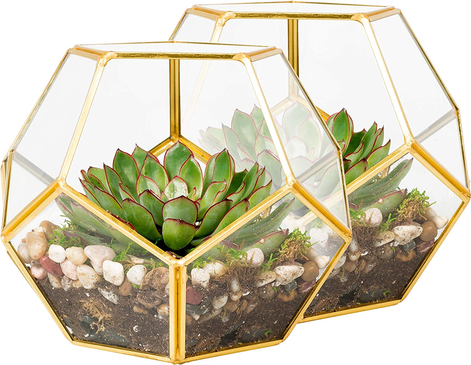 Gold,Clear 2pcs Glass Geometric Container Terrarium for Succulent /& Air Plant