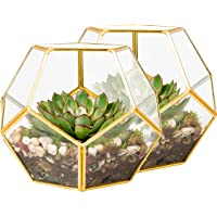 Deco Glass Terrarium, Succulent & Air Plant