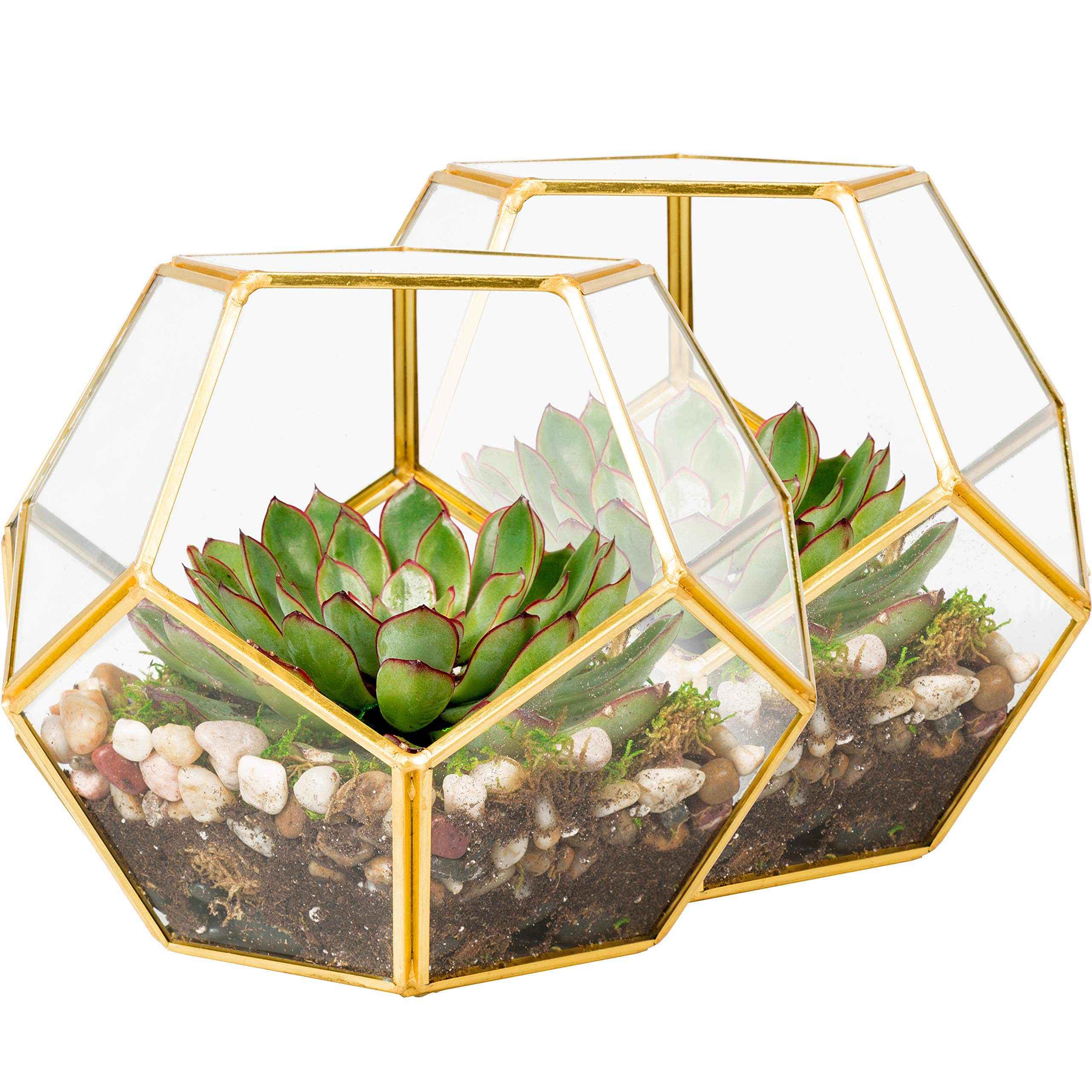 Deco 2 Glass Geometric Terrarium, Succulent & Air Plant Sphere with Gold Trim - 8.2 x 8.2 x 8.2 in (2 Pack) by Deco