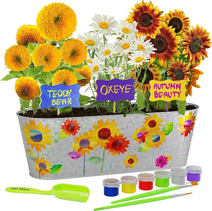 Dan&Darci Paint & Plant Sunflower Growing Kit - Grow Autumn Beauty, Teddy Bear, Oxeye Sun Flowers : Includes Everything Needed to Paint and Grow - Great STEM Gift for Children