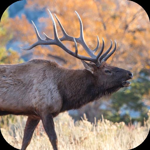 Elk Sounds