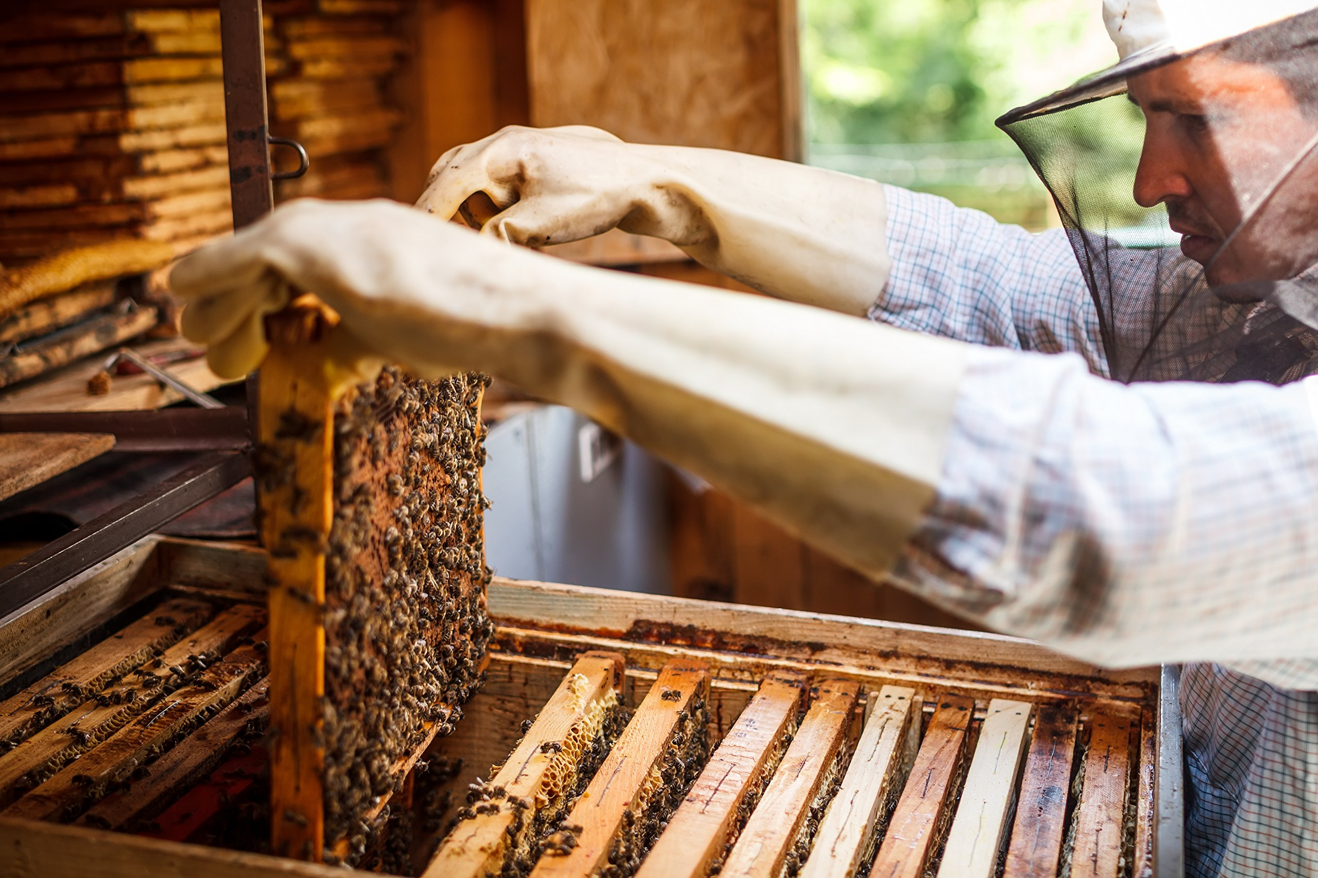 Pure New Zealand Manuka Honey - UMF 20+ Certified - 8.8 oz- All Blacks Official Licensed Honey by Mercier Kitchen (Image #2)